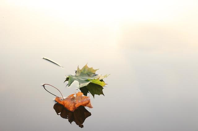 Jak nawilżyć skórę jesienią? Poznaj produkty, które ułatwią Ci zadanie